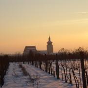 Winterlicher Weingarten mit Pfarrkirche St. Martin Pillichsdorf